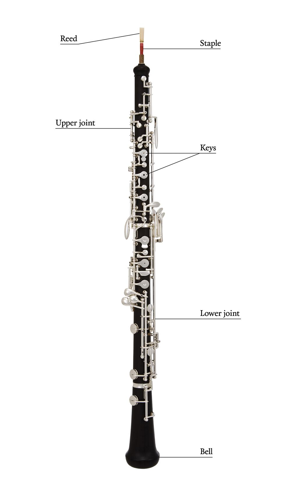 The Oboe